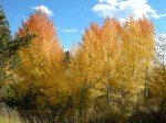 Gorgeous fall leaves along the highway in Grand Teton National Park