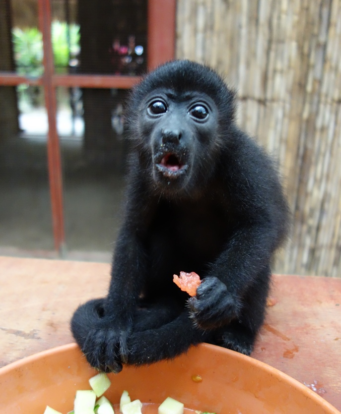 Baby monkey (we think Pipo)