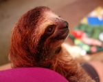 Corey the sloth