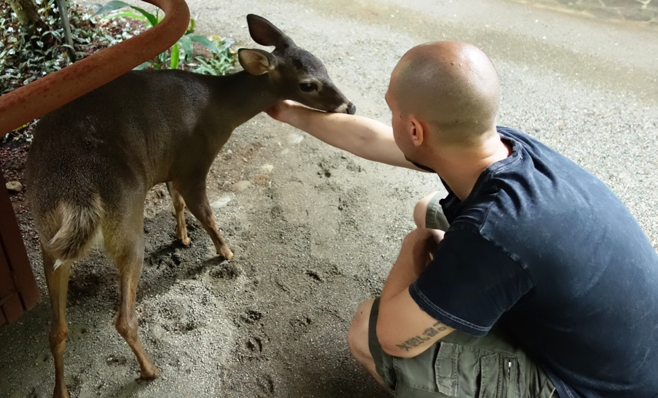 jamie and the baby Deer, Chai