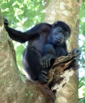 Manina in a tree at the Monkey Picnic in the jungle