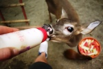 Ciao the Baby Deer - awww!