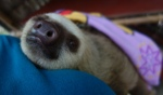 Carrying Yare to the Sloth Garden - doesn't he look adorable!?!?